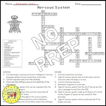 The Nervous System Crossword Puzzle