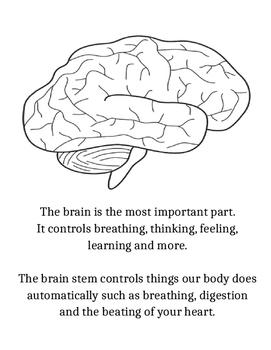 Nervous System Book
