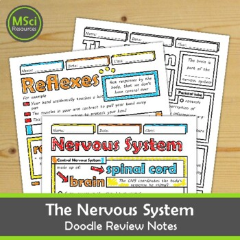 Nervous System, Brain Structure, Reflexes Middle School Biology Doodle Notes