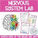 Nervous System Brain Lab
