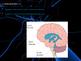 Nervous System - Brain and Autonomic Nervous System