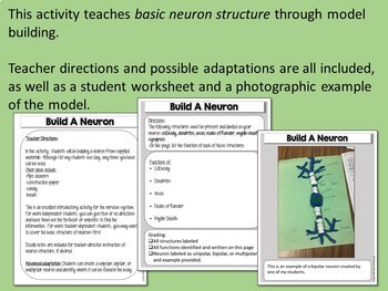 Nervous system build a neuron modeling activity with doodle notes ccuart Image collections