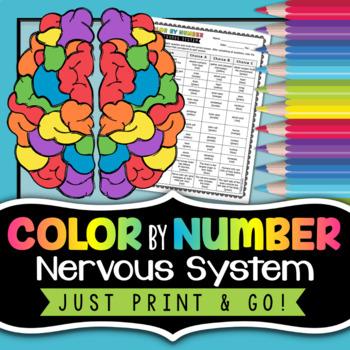Nervous System - Color By Number