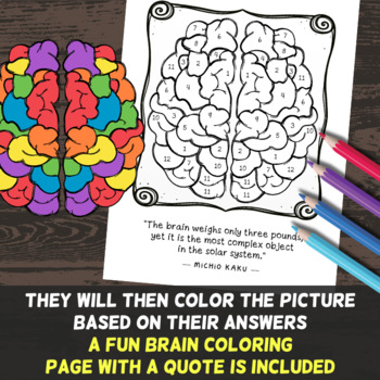 Nervous System Color by Number - Science Color By Number