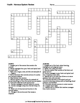 Nervous System: Crossword Puzzle by Lori Maldonado | TpT
