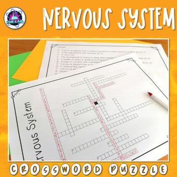 Nervous System Crossword Puzzle