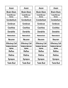 Nervous System Cut-n-Paste Vocabulary
