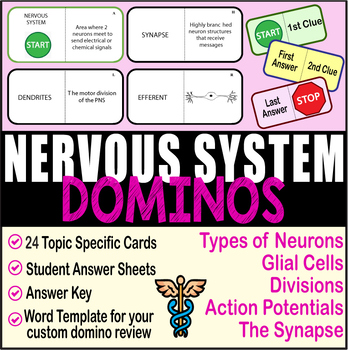 Nervous System ~DOMINO REVIEW~ 24 Cards + Answer Sheets + Key- ANATOMY