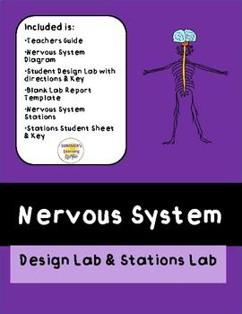 Nervous System Design Lab & Stations Activity