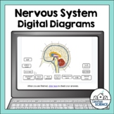 Nervous System Diagrams for Distance Learning