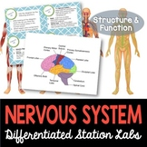 Nervous System Student-Led Station Lab