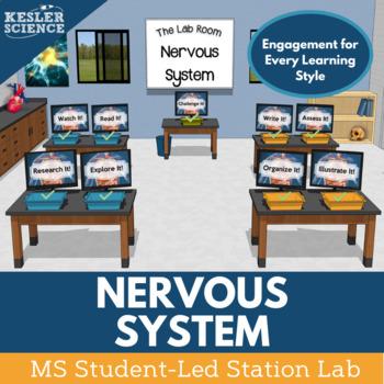 Nervous System Student-Led Station Lab