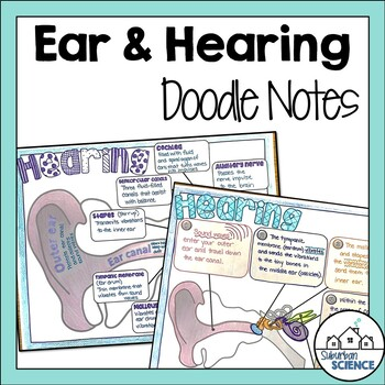 Nervous System: Ear Anatomy & Hearing Doodle Notes by Gnature with Gnat