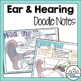 Ear Anatomy - Hearing Illustrated Notes & Diagrams