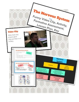 Nervous System & Endocrine System: Funny Vid Clip, Notes, Activity, Lesson