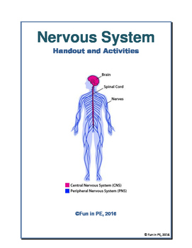 Nervous System Entire Unit No Prep Notes, Worksheets, Activities