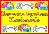 Nervous System Flashcards Vocabulary Review