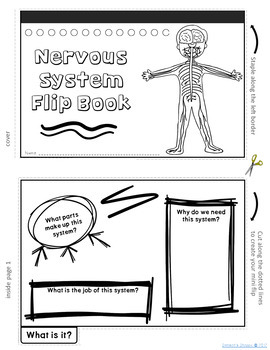 Nervous System Flip Book Review Activity