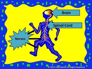 Nervous System Freebie