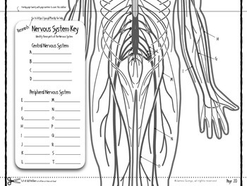 Nervous System Infographic