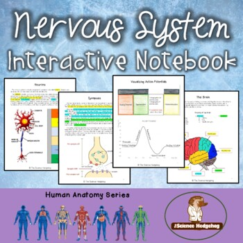 Nervous System Interactive Notebook