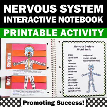 Nervous System Activity Human Body Systems Interactive Notebook Science Foldable