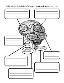 Nervous System - Journal
