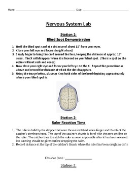 Nervous System Lab