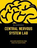 Nervous System Lab II