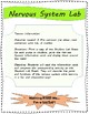 Nervous System Hands-On Lab Stations