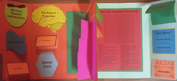 Nervous System Lapbook/Interactive Notebook