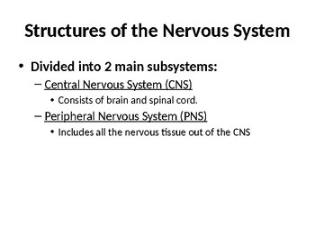 Nervous System Lecture Notes