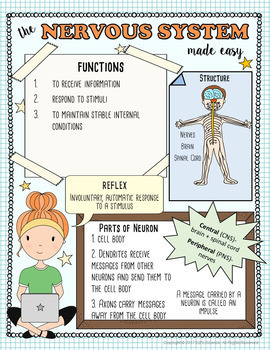 Nervous System Made Easy- Student Notes and Powerpoint