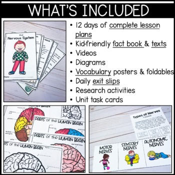 Nervous System: Mini-unit including functions, the brain, nerves, and more!