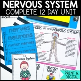 Nervous System: complete unit including functions, the bra