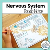 Nervous System Doodle Notes & Diagrams