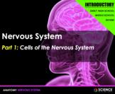 PPT - Nervous System (INTRODUCTION) - Neurons, Impulses, C