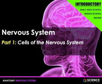 Nervous System - Neurons, Nerve Impulses, Synapses, CNS, P
