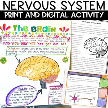 Nervous System Nonfiction Article and Doodle Sketch Note Activity
