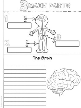 Nervous System Note Taker
