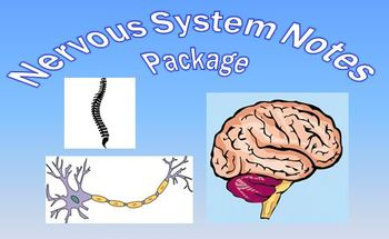 Nervous System Notes Package Powerpoint Presentations