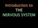 Nervous System: Optical Illusions Lab
