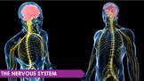 Nervous System PPT