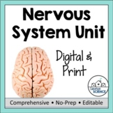 Nervous System Unit- PowerPoint, Illustrated Notes, Diagrams, Labs, & Quiz