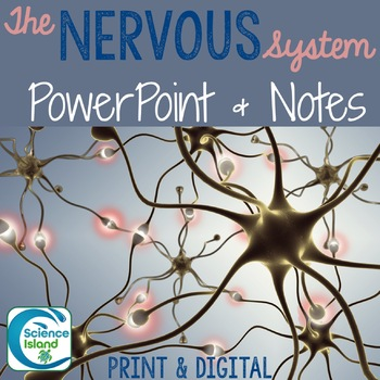 Nervous System PowerPoint and Notes
