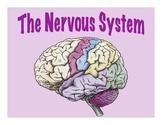 Nervous System - Presentation