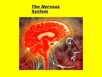 Nervous System Presentation