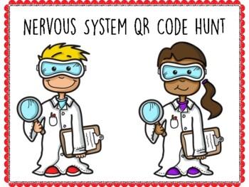 Nervous System QR Code Hunt (Content Review or Notebook Quiz)