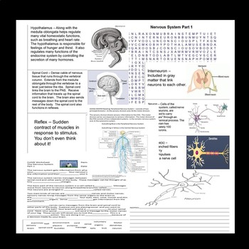 Nervous System Quiz, Scrapbook, Word Wall SPED/Autism/ID/SLD/ELL