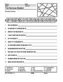 Nervous System Secret Code Printable